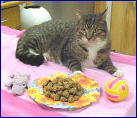 Georgetown Animal Clinic, PC - Veterinarian serving Williamsville, Amherst and Buffalo NY areas: Cat with Cat's Meow Cookies