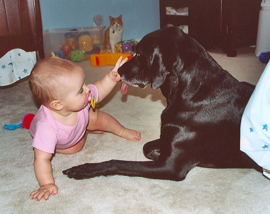 Georgetown Animal Clinic, PC - Veterinarian serving Williamsville, Amherst and Buffalo NY areas: Baby with Lab